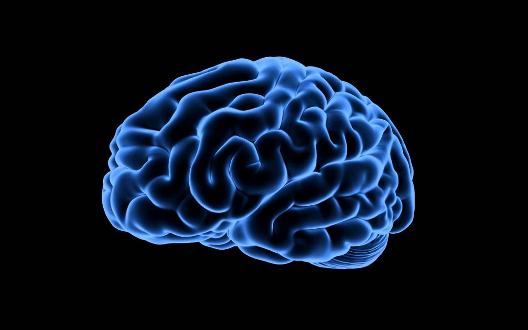 Brain Aging: The Brain-Food Connection